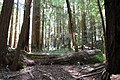 Muir Woods National Monument 2010 10.JPG