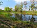 Muromets island lake1.JPG