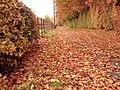 Must be autumn - geograph.org.uk - 1036545.jpg