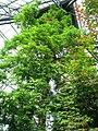 Muttart Conservatory (4520205210).jpg