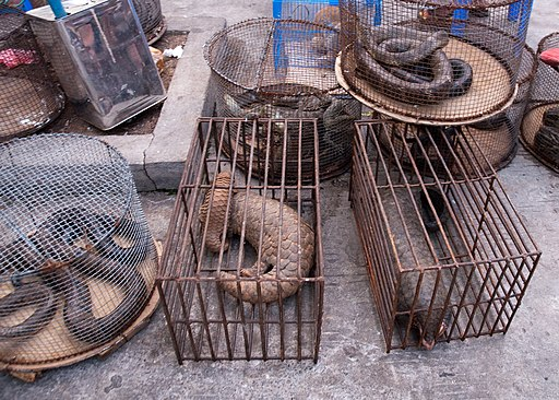 Myanmar Illicit Endangered Wildlife Market 04 (cropped)