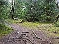 Mythos Wald trail Harz 04.jpg