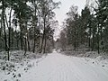 Naherholungsgebiet am Rande des Ruhrgebiets - Winter 2009 - panoramio (4).jpg