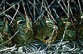 Nasas - panoramio - Javier Branas (1).jpg