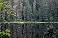 Nationalpark Schwarzwald Wildsee-11.jpg