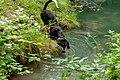 Naturbëschreservat «Beetebuerger Bësch»-107.jpg