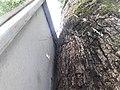 Nature20180824 130304.jpg