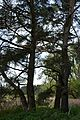 Naturschutzgebiet Mittleres Innerstetal mit Kanstein - Innerste bei Rhene - Uferwald (7).JPG