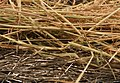 Needlestack and haystack2.jpg