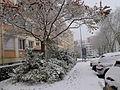 Neige à Bellevue (4).JPG