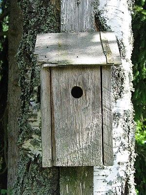 Caja nido