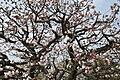 Nijo Castle Ninomaru Gardens 03.JPG