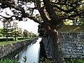 Nijojocho, Nakagyo Ward, Kyoto, Kyoto Prefecture 604-8301, Japan - panoramio (4).jpg