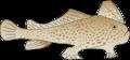 Normal ian-symbol-brachionichthys-hirsutus.png