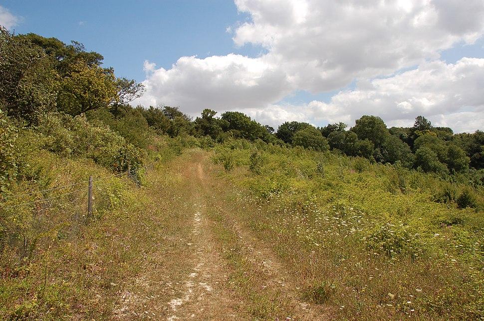 North Downs Way near Hollingbourne 1