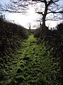 Northlew Footpath 21 - geograph.org.uk - 331862.jpg