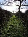 Northlew Footpath 21 - geograph.org.uk - 331862.jpg