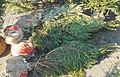 Novogodisnja Jelka-Christmas Tree 3.JPG