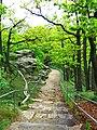 Oaks - panoramio (6).jpg