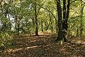Oberhausen - Knappenhalde 14 ies.jpg