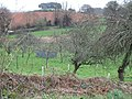 Orchard near Blackheath Farm, Exminster - geograph.org.uk - 154356.jpg