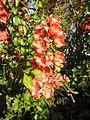 Ornamental Plant.jpg
