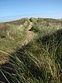 Over the dunes and onto the beach - geograph.org.uk - 995000.jpg