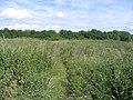 Overgrown Pathway - geograph.org.uk - 1358819.jpg