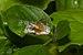 Oxyopidae of Kadavoor.jpg