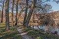 Pörtschach Halbinselpromenade Landschaftspark Trauerweide 15122016 5718.jpg