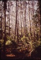 PRIMEVAL FOREST ON BULLS ISLAND, A NATIONAL GAME REFUGE - NARA - 546947.tif