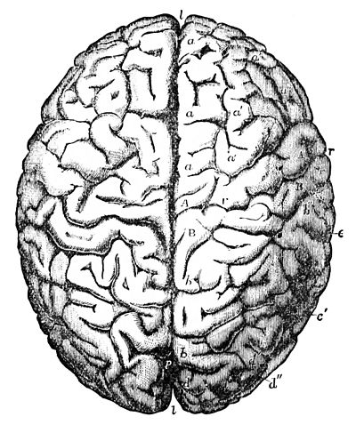 PSM V26 D768 Brain of gauss.jpg
