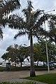 Palme auf Rua Frei Caneca (21494929353).jpg
