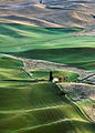 Palouse farmland in morning light.jpg