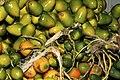 Parepoux fruit de Guyane Cl J Weber01 (23649199696).jpg
