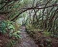 Path - Anaga (26531298689).jpg