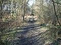 Path in Deerleap Inclosure - geograph.org.uk - 1306533.jpg