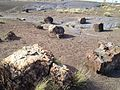 Petrified Forest (31217673320).jpg
