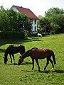 Pferdekoppel Kißlegg Mai 2012.JPG