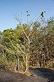 Phu Pha Thoep National Park (MGK21330).jpg