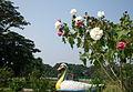 Picnic Spot at Mohammadi Garden.jpg
