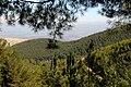 PikiWiki Israel 14887 Birya Forest.jpg
