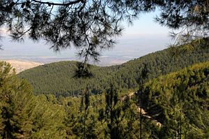 Birya - Birya forest