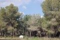 PikiWiki Israel 18949 Anemones in Beeri forest.JPG