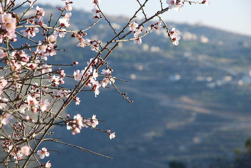 Israel Nature