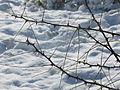 PikiWiki Israel 41374 Snow in Jerusalem.JPG
