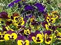 PikiWiki Israel 5482 Plants of Israel.JPG