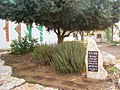 PikiWiki Israel 9866 memorial garden in tel-mond.jpg