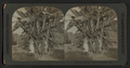 Pioneers of the New Dolgeville, Cal, from Robert N. Dennis collection of stereoscopic views.png