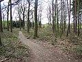 Pipe Hill Woodland Walk - geograph.org.uk - 403231.jpg